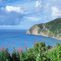 Trees on the coast, Foreland Point, Lynmouth, North Devon, Devon, England
