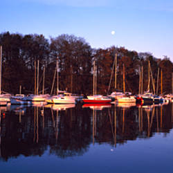 Reflection of trees in water, Gulf of Morbihan, Morbihan, Brittany, France