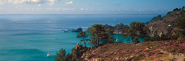 Trees on the coast, Saint-Hernot, Crozon, Baie De Douarnenez, Finistere, Brittany, France