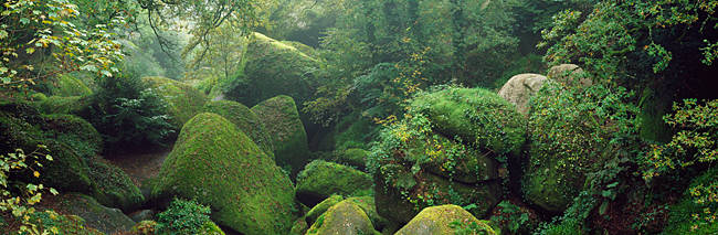 Granite chaos in a forest, Le Chaos De Rochers, Huelgoat, Brittany, France