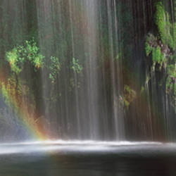 Rainbow formed in front of waterfall in a forest, near Dunsmuir, California, USA