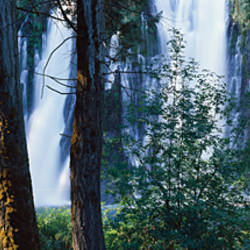 Waterfall in a forest, McArthur-Burney Falls Memorial State Park, California, USA