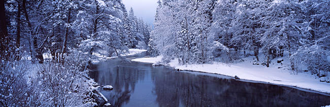 Snow covered trees along a river, Yosemite National Park, California, USA