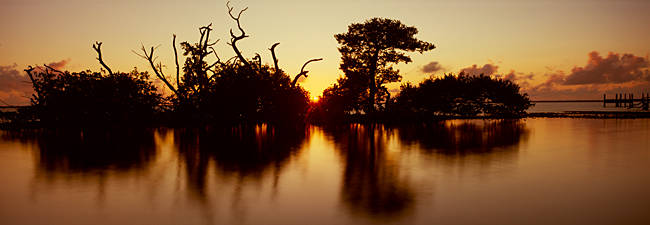 Silhouette of trees at sunset, Oyster Bar, Pine Island, Hernando County, Florida, USA