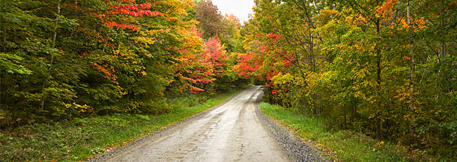 Dirt road passing through a forest, Stowe, Lamoille County, Vermont, USA