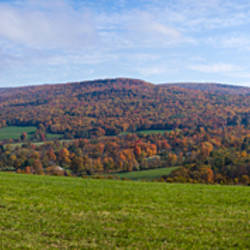 Trees on a landscape, Ayrhill Farm, Adams, Berkshire County, Massachusetts, USA