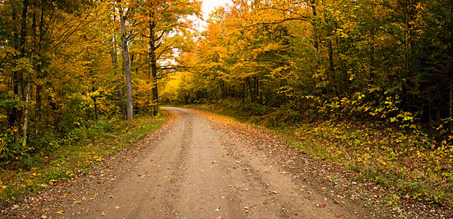 Dirt road passing through a forest, New Hampshire, USA