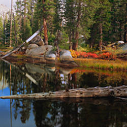 Reflection of trees in water, Yosemite National Park, California, USA