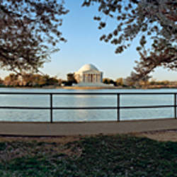 Cherry trees at the riverside, Tidal Basin, Potomac River, Washington DC, USA