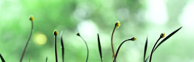 Close-up of buds