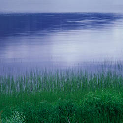Grass along a river, Norway