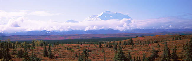 Trees on a landscape with a mountain range in the background, Mt McKinley, Denali National Park, Alaska, USA