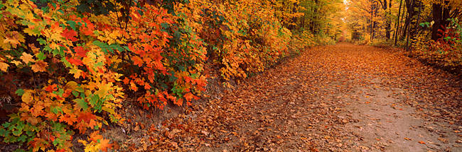 Road passing through autumn forest, Traverse City, Grand Traverse County, Michigan, USA