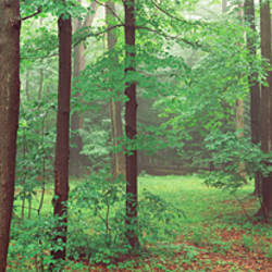 Trees in a forest, Chestnut Ridge County Park, Orchard Park, Erie County, New York State, USA