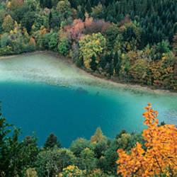 Aerial view of a forest, Lacs De Maclu, Le Frasnois, Jura, Franche-Comte, France