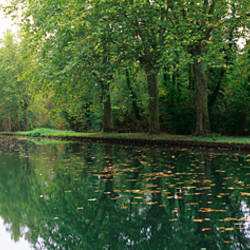 Reflection of trees in a canal, Rhone-Rhine Canal, Alsace, France