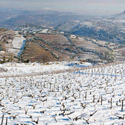 Vineyards in blizzard, Alto Douro, Douro Valley, Portugal