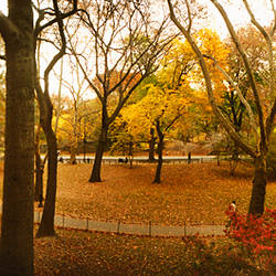 Trees in a park, Central Park, Manhattan, New York City, New York State, USA
