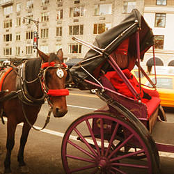 Horse drawn carriages at the roadside, Central Park, Manhattan, New York City, New York State, USA