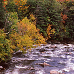 River flowing through a forest, Ausable River, Adirondack Mountains, Wilmington, Essex County, New York State, USA