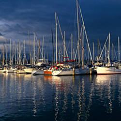 Sailboats moored at a harbor, Hobart Harbor, Hobart, Tasmania, Australia