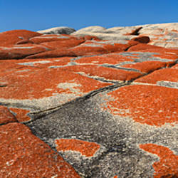 Lichen covered rocks, Cosy Corner, Bay of Fires National Park, Tasmania, Australia
