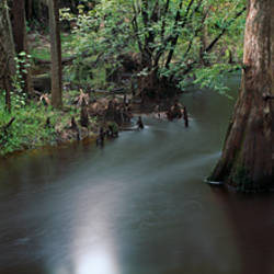 Creek flowing through a forest, Charlotte County, Florida, USA