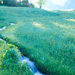 Stream flowing through a field