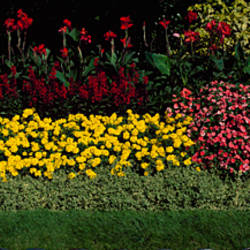 Flower bed in a park, St. James's Park, London, England