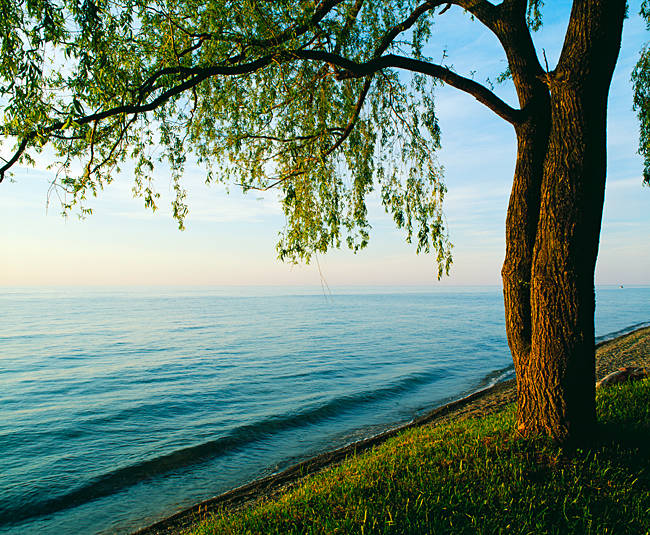 Tree on shore of Lake Ontario, dusk, New York, USA