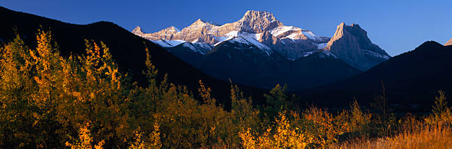 Aspen trees with a mountain in the background, Mount Lougheed, Rocky Mountains, Kananaskis Country, Calgary, Alberta, Canada