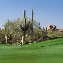 Saguaro cacti in a golf course, Troon North Golf Club, Scottsdale, Maricopa County, Arizona, USA
