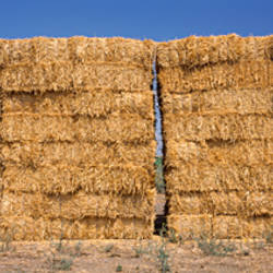 Hay stacks in a field, California, USA