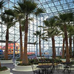 Palm trees in a ballroom, Crystal Gardens Ballroom, Navy Pier, Chicago, Illinois, USA