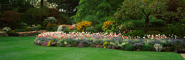 Flowers in a garden, Butchart Gardens, Brentwood Bay, Vancouver Island, British Columbia, Canada