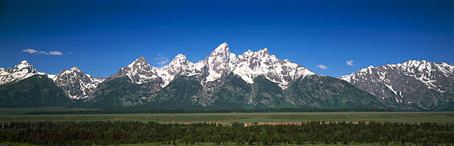 Trees in a forest with mountains in the background, Teton Point Turnout, Teton Range, Grand Teton National Park, Wyoming, USA