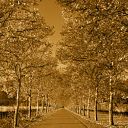 Trees along a road, Beaulieu Vineyard, Rutherford, Napa Valley, Napa, Napa County, California, USA