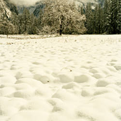 Snow covered landscape, Yosemite Valley, Yosemite National Park, Mariposa County, California, USA