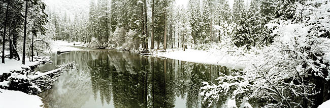 Reflection of trees in a river, Merced River, Yosemite Valley, Yosemite National Park, Mariposa County, California, USA