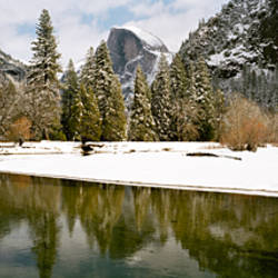 Reflection of trees in a river, Half Dome, Yosemite National Park, Mariposa County, California, USA