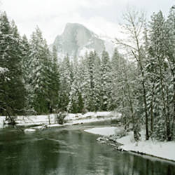 Trees covered with snow, Half Dome, Yosemite National Park, Mariposa County, California, USA