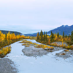 Stream passing through a forest, Chugach National Forest, Alaska, USA