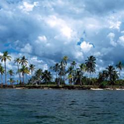Palm trees on an island, San Blas Islands, Panama