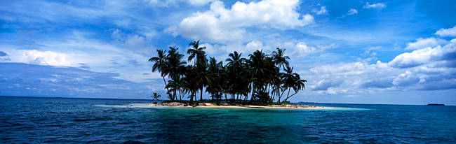 Palm trees on an island, San Blas Islands, Panama
