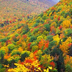 Mountain forest in autumn, Nova Scotia, Canada