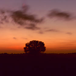 Silhouette of a tree at morning, Babcock Ranch, Charlotte County, Florida, USA