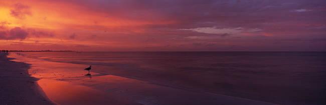 Bird on the beach, Fort Myers Beach, Estero Island, Lee County, Florida, USA