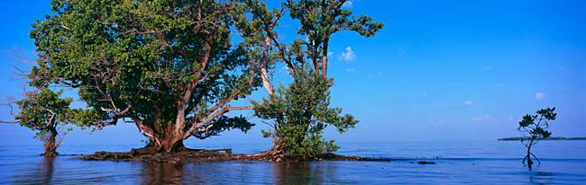 Trees in the sea, Ten Thousand Islands, Florida, USA