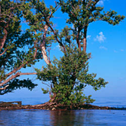 Trees in the sea, Ten Thousand Islands, Florida, USA