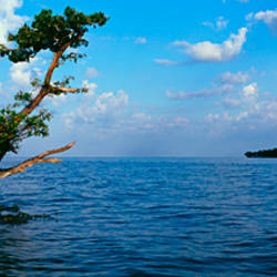 Tree in the sea, Ten Thousand Islands, Florida, USA